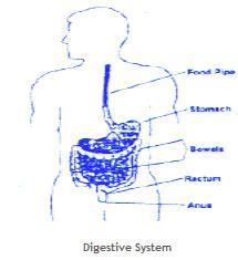 bowel1